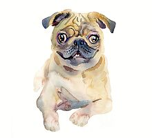 Pug by coconuttowers