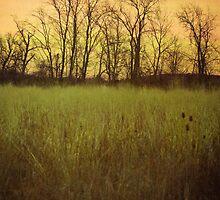 Awakening by Olivia Joy StClaire