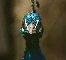 Peacock Front View Portrait by Patrycja Polechonska