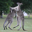 Lets Dance by LESLEY B