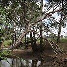 Dry creek bed, Warwick, QLD by Albert