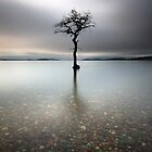 Loch Lomond Tree by Photo Scotland