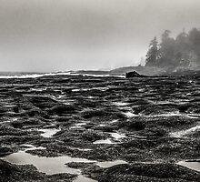 low tide by maria miller