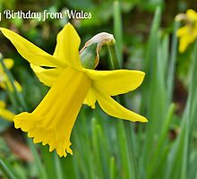 Daffodils - Birthday Card from Wales by Paula J James