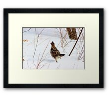 Catch Me if You Can! Framed Print