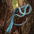 Tree Snake by Karen Duffy