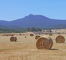 Hay below Ben Lomond by Graeme  Hyde