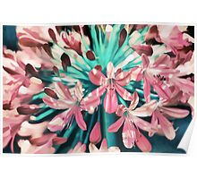 Sunny Agapanthus Flower in Pink & Teal Poster