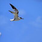 My Tern To Surf by Noel Elliot