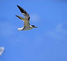 My Tern To Surf by Noel Elliot