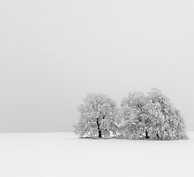 trees by christian richter