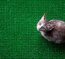 Cat Mat by Shaik Najeebuddin