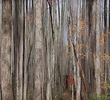 Curtain of Trees  by Terry  Pellmar