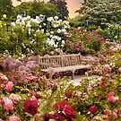 Rose Garden Sunset by Jessica Jenney