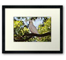 Cockatoo Parrot Framed Print