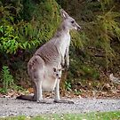 Kangaroo with Joey by James Millward