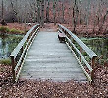 Bridge in the Woods by Gilda Axelrod