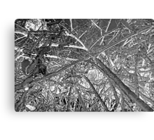 Winter Wood Inverted Colors Metal Print