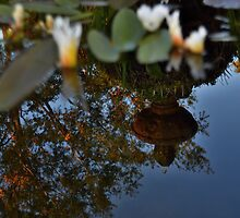 Reflections on the Pond by seeyoutoo