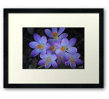 Colourful Spring Framed Print
