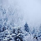 Snowy Black Forest by Imi Koetz