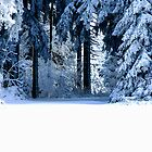 Snowy Black Forest 4 by Imi Koetz