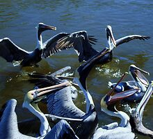 Feeding Frenzy... by Robin Monroe