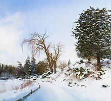 Winter at Edwards Gardens by John Velocci