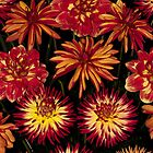 Bright orange and yellow Dahlias by Martyn Franklin
