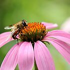 Mr. Busy Bee by AbigailJoy