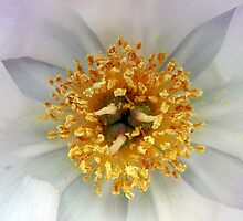Crown of Pollen  by ClassicCamera92