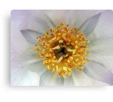 Crown of Pollen  Canvas Print