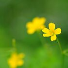 Little Yellow Flowers by Dana Horne
