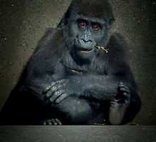 Baby gorilla by chris2766