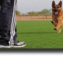 Dog Obedience Training by qualityk9