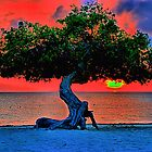Watapana Tree - Aruba by djphoto