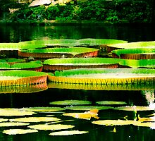 Giant Lily Pads (Bok Tower Gardens, Lake Wales, Florida) by jenbucheli