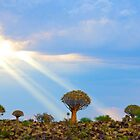 Quiver Tree Forest, Namibia, Africa by Shannon Benson