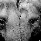 Elephant Mirror by Shannon Benson