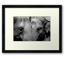 Elephant Mirror Framed Print