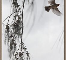 Japanese Bird on Maui Born For Freedom (diptych image 2 of 2) by Peter H. Rosen