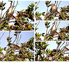 A COLLAGE OF A MOCKINGBIRD HIGH IN THE PYRACANTHA TREE by JAYMILO