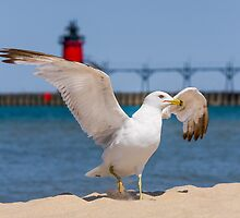 Flapping Gull And Lighthouse by Kenneth Keifer