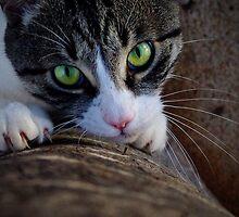 Dangerous Eyes by kurrawinya