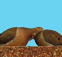 Cuddly Doves! by jozi1
