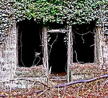 Framing Timbers by Paul Lubaczewski