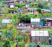 Edinburgh Allotments by Ryan McEwan