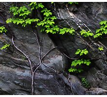 Rocky Wall, Tennessee by Rogere0829