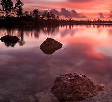 Calm in the Glades by PeaceInArt