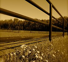 Fence Rails by CaptureRadiance